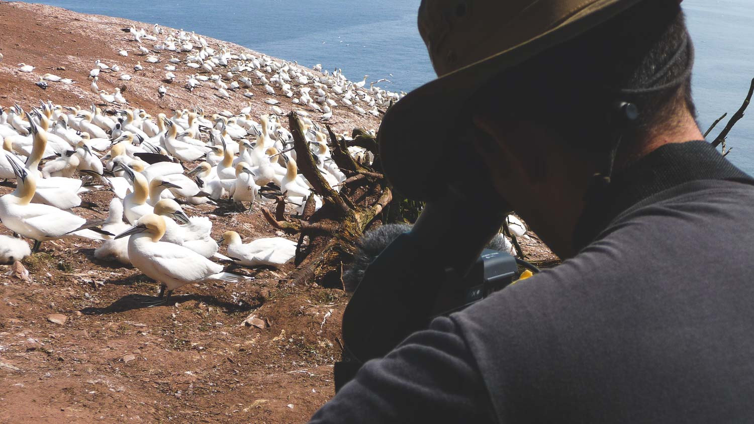 A nice picture of our photo director taken on Bonaventure Island in Gaspésie in front of a colony of Northern Gannets